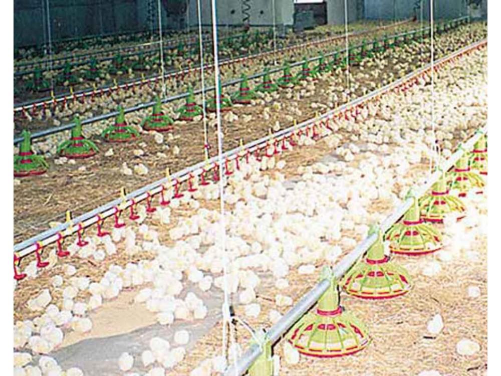 Sistema di trasporto di alimentazione avicola a spirale