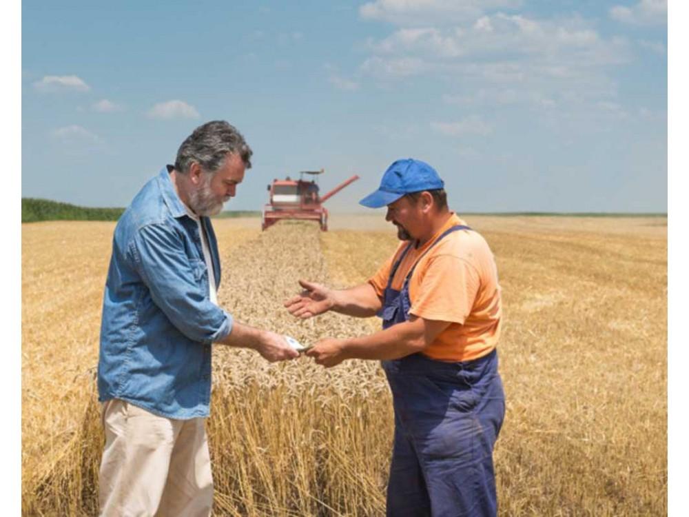 Software su piattaforma IBM per il settore cerealitico